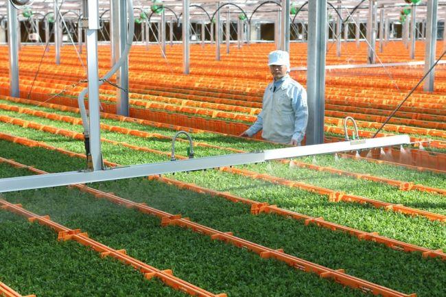 村上農園「野菜高騰を乗り切るレシピ特集」を公開