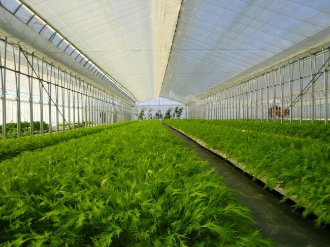 新京成電鉄とエスプールプラスによる障がい者の雇用創出を目的とした農福連携ファーム「わーくはぴねす農園」を開設