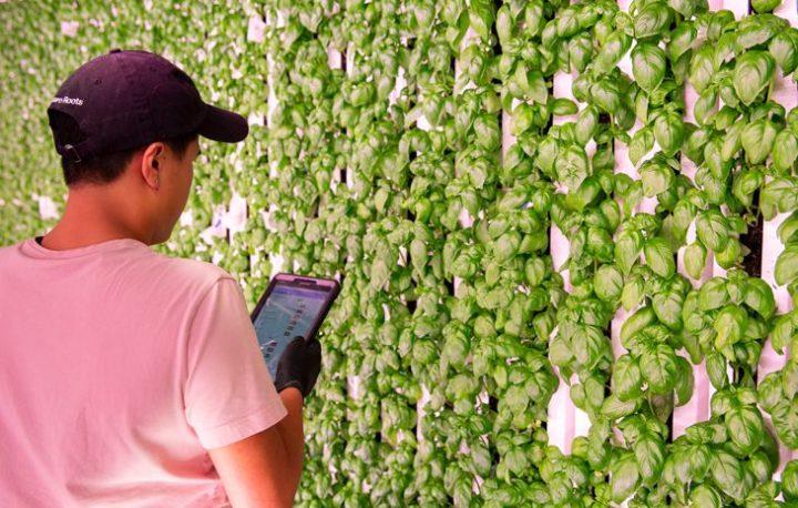 食料品の卸売GFS社、ミシガン州の拠点にSquare Roots社の植物工場がオープン