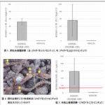 カゴメ、外来害虫「シストセンチュウ」への抵抗性と密度低減効果を持つトマトの開発に成功