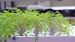 明治大 植物工場基盤技術研究センター主催のシンポジウムを10月27日に開催