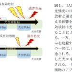 東京大学など、700-800nmの遠赤色光が光合成の効率を促進する研究結果を発表