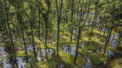 タカラレーベンなど、ボタニカルガーデン・アートビオトープ「水庭」がグッドデザイン賞を獲得
