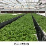 三菱ケミカル、中国の瀋陽秋実と植物工場事業で戦略的提携へ。トマト・イチゴの生産システム拡大