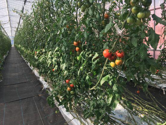 渡辺パイプ「アグリカルチャークラブ」新潟県の植物工場施設・モデル農場見学会を11月に開催
