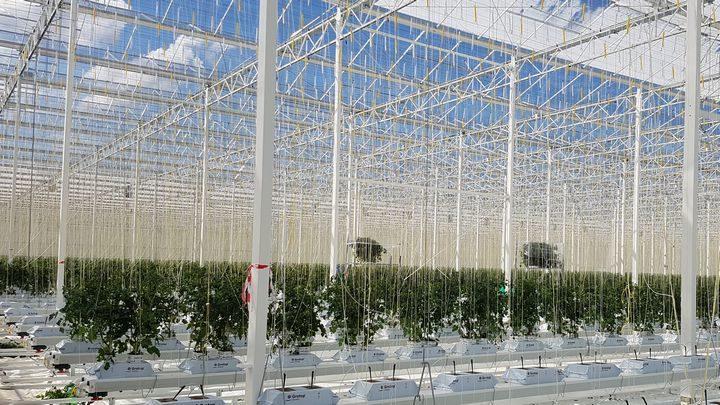 英国トマト市場の12%を供給する植物工場が来年に稼働予定