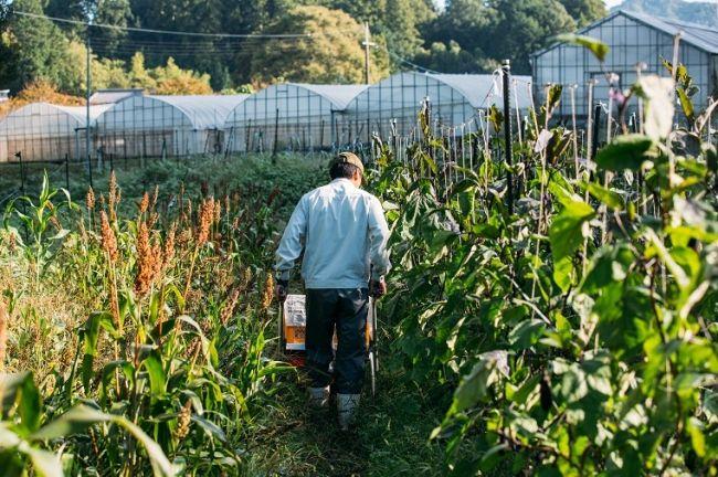 ロート製薬の子会社・農業法人はじまり屋、有機JAS認定を取得