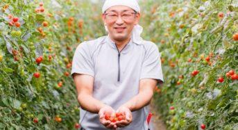 鳥羽農園、北海道南富良野のミニトマト約120個を完全手しぼりした「ミニトマトジュース」を販売