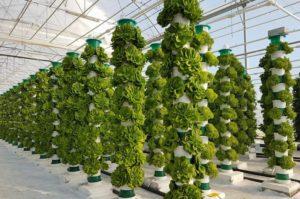 太陽光を利用した英国・タワー型植物工場ベンチャー、4カ所50ヘクタールの栽培施設を稼働へ