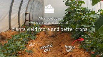 土耕の最適環境制御のイスラエル・ルーツ社、太陽光パネルのクリア・ヴュー社と提携