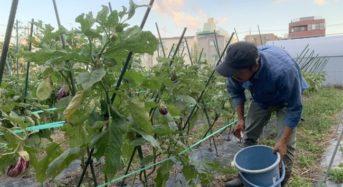 働き方改革メディア『副業新聞Vol.6』【都市×農業】から見える新しい複業のカタチを発行