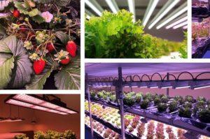 米国ケイリックス社、植物工場向けにAIを活用したLEDシステムの開発へ