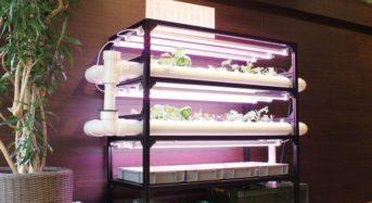 飲食店などの販促支援シー・アール・エム、自社オフィスに植物工場キットを設置