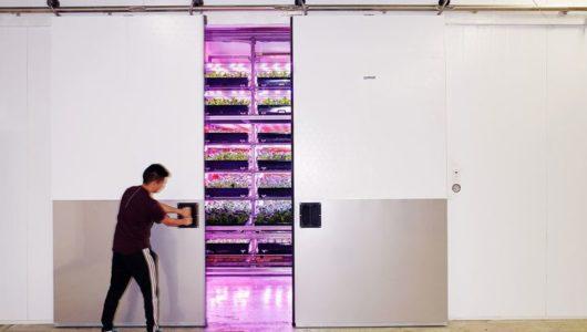 自動化を導入した植物工場、エレベート・ファームズ社が約2億円の資金調達