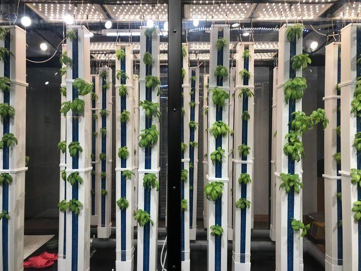 グリーンリバーHD、人工光型の縦型植物工場システムを開発。店舗併設型などを想定