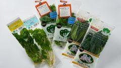 日本山村硝子、植物工場やさいのネット販売を開始。機能性表⽰⾷品「ケール」も販売