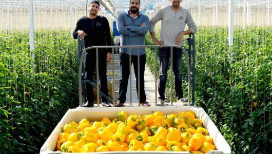 カナダの植物工場ファーム、生鮮野菜の流通を手掛ける大手Oppy社と独占契約を締結