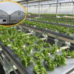 地方創生型障がい者雇用支援サービス「コルディアーレ農園」が長崎県五島市にオープン