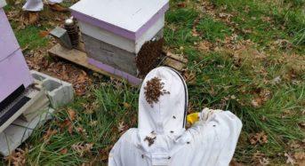 インディアナ大学、受粉用「蜂の健康状態」解析ベンチャーに25万ドルを投資