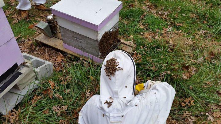 インディアナ大学、受粉を利用する生産者向け「蜂の健康状態」解析ベンチャーへ投資