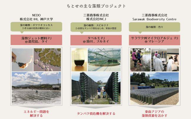 ちとせグループ、藻類を専門とする情報メディア 「Modia(藻ディア)」をリニューアル
