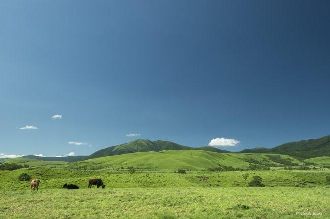 次世代型和牛畜産のGOODGOOD、ロート製薬などの出資により約1.9億円の資金調達