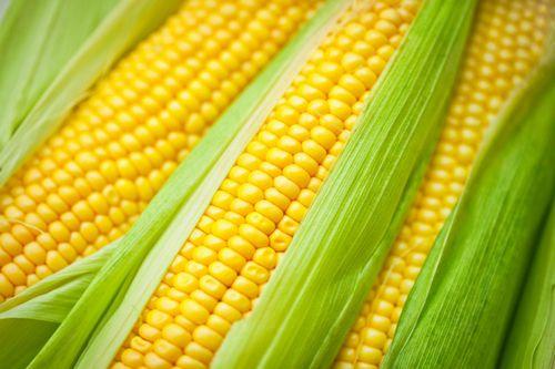 ゲノム編集「カスタマイズ型」の種苗開発ベンチャー、約48億円の資金調達へ