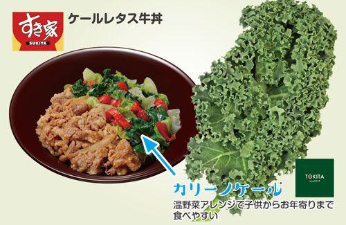 トキタ種苗「カリーノケール」すき家のケールレタス牛丼に採用