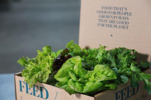 街が閉鎖ロックダウンしたリバプール住民へ、タワー型植物工場にて野菜を支援