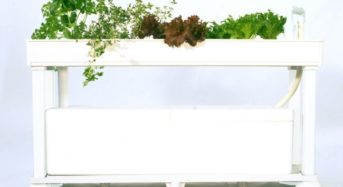協和、家庭用水耕栽培キットに新商品を追加