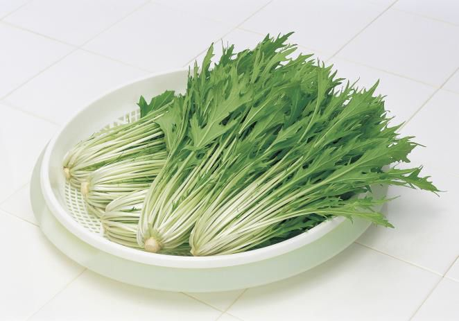 サカタのタネ、ミズナ新品種「極早生水天」の種子を発売。夏場のフザリウムにも耐性あり