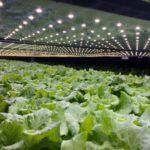 デンマークにて1日3万株以上・欧州最大の植物工場が年内に稼働