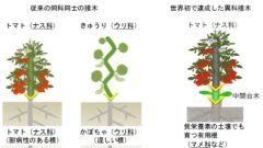 損保ジャパン日本興亜、世界初の接木技術を持つアグリテックベンチャーと連携
