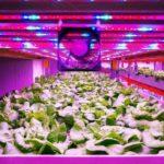 世界中の植物工場が英国に集結 ~9月に「国際会議」が開催予定~