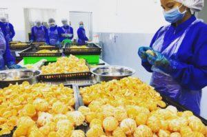 JFPによるカンボジアでの農業ビジネス「Made by Japan」ナチュラルローソンにて販売開始