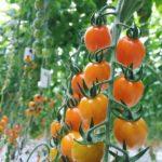 新型コロナへの対応支援、国内外の植物工場が野菜の無償提供へ