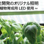 植物工場におけるバジルの比較栽培実験&プラント設計における注意点
