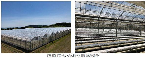大和フード&アグリ「みらいの畑から」に資本参加・大規模ハウスによるトマト栽培を開始