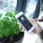 アグリメディア、オンラインで野菜栽培キットの提供から栽培指導までサポートする家庭菜園サービス「おうち畑」を開始