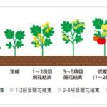 パナソニック、土壌と作物を総合的に分析する「栽培ナビドクター」を開始