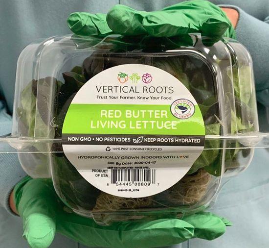 コンテナ型植物工場 Verical Roots社、外食関連の労働者20名を雇用