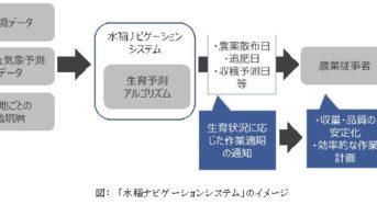 NTTデータと神明、水稲栽培管理に関する共同実証へ