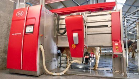 県立広島大学、中規模農家を想定した酪農ICTの実証・搾乳ロボットと搾乳機の「ハイブリッド活用」へ