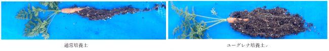 小橋工業、微細藻類ユーグレナを用いた培養土肥料を開発・テスト販売へ