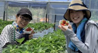 六甲山カンツリーハウス、夏イチゴの摘み取り体験・観光農園を7月23日にシーズンオープン