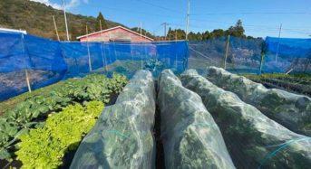 昆虫ベンチャーのムスカ、熊本県菊池市にてアグリ技術実証事業をスタート