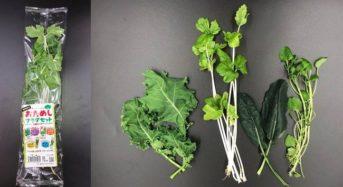 日本山村硝子、機能性に優れた植物工場やさい「おためしサラダセット」を発売