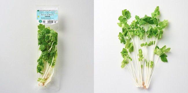日本山村硝子、機能性に優れた植物工場やさいを活用した「おためしサラダセット」を発売