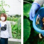 バンタン、製菓学部にてITを活用した遠隔農場実習を導入