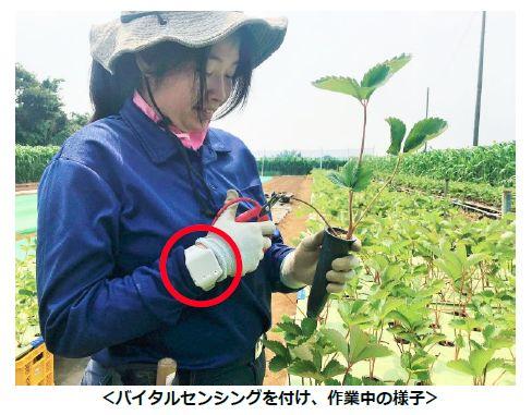 パーソルサンクス、農福連携・農場にて熱中症対策「バイタルセンシング」を導入
